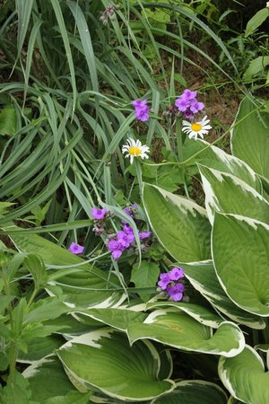 Quechee Gorge: Flowers at the visitor's center