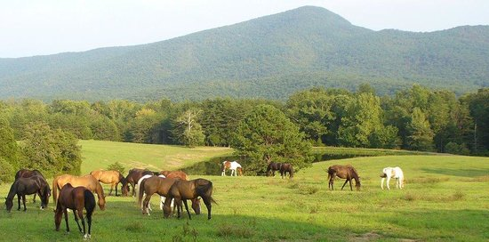 Fort Valley, VA: Ride the Mountains of the Shenandoah Valley near Luray
