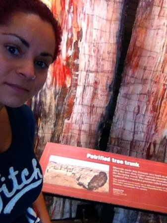 Denver Museum of Nature & Science: Petrified tree trunk!