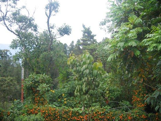 La Campana Hotel Boutique : Medellín espacio en donde se disfruta de la naturaleza