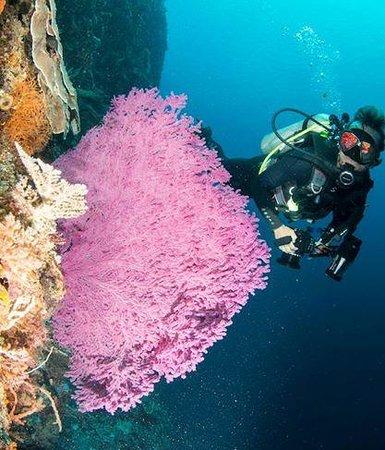 Compass Charters & Ocean Adventures : Adara Coral Wall