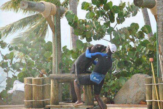 Dolphin Explorer: Show de leones marinos
