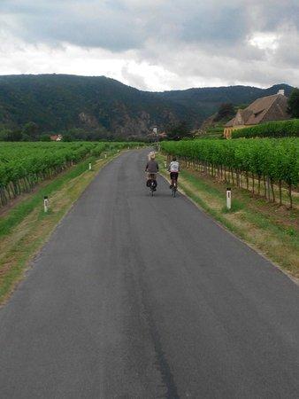 Wein & Wachau : Bersepeda di sekitar kebun anggur