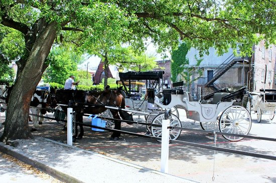Palmetto Carriage Works: Our private horse and carraige