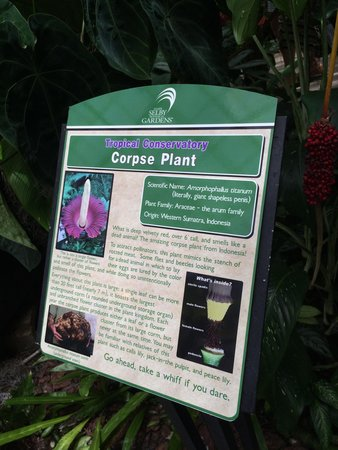 Marie Selby Botanical Gardens : Incredible diversity of plants