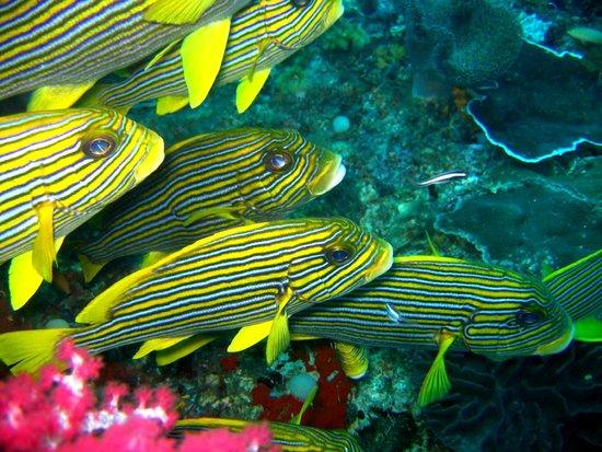 Raja Ampat Islands: Sweet lips