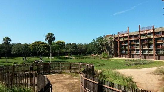 Disney's Animal Kingdom Lodge: Vista desde la habitación