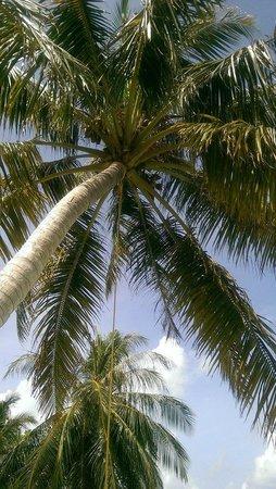 Holiday Island Resort & Spa : 7