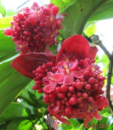 Singapore Botanic Gardens: 花