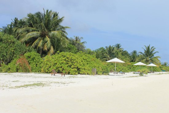 Holiday Island Resort & Spa : 5
