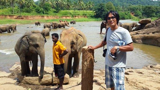 Pinnawala Elephant Orphanage: Bathing place