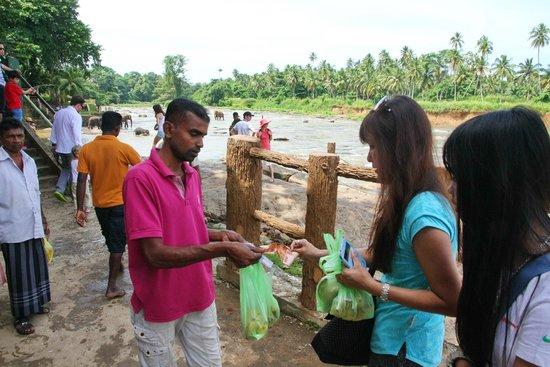 Pinnawala Elephant Orphanage: Feeding with bananas