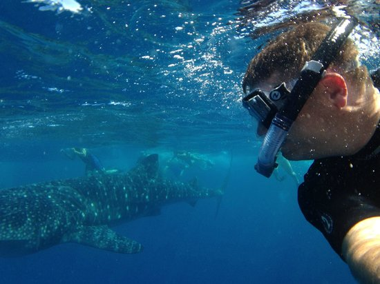 Isla Mujeres Whale Shark Tours by Searious Diving: whale shark selfie