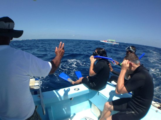 Isla Mujeres Whale Shark Tours by Searious Diving: Ready for the drop