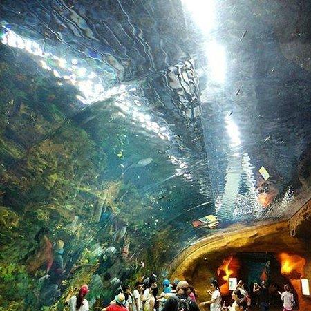 Ocean Kingdom - Picture of Chimelong Ocean Kingdom, Zhuhai ...