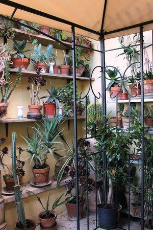 Anna Hotel: Le piante sul terrazzino
