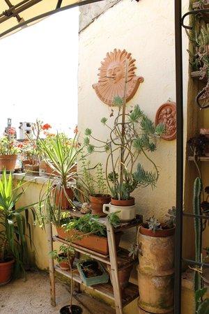 Anna Hotel: Altre piante