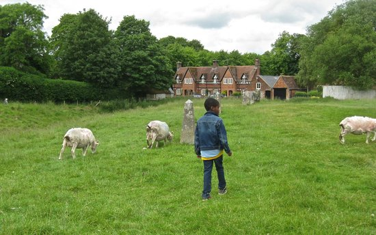 Mad Max Tours : Chasing sheep in Avebury, UK