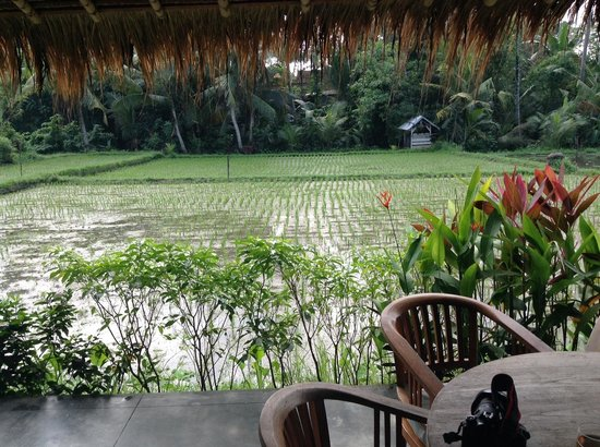 Sapulidi Bali Resort & Spa : rice paddies