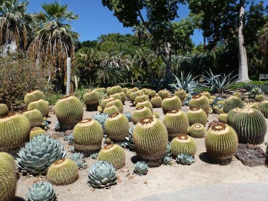 The Huntington Desert Garden: small section of the Desert Garden