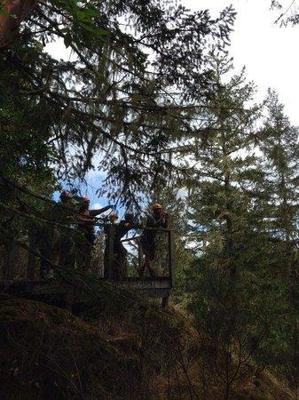 Adrena LINE Zipline Adventure Tours: There you go!