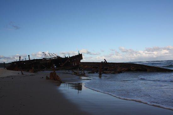 Dingos Fraser Island Review