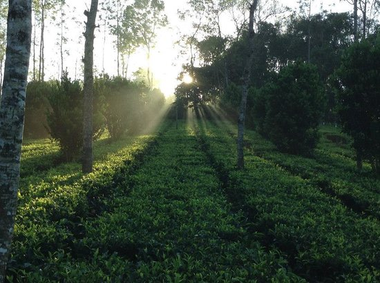 Dream Catcher Plantation Resort : Morning View