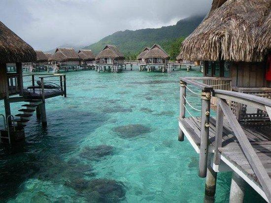 Sofitel Moorea Ia Ora Beach Resort : From our bungalow