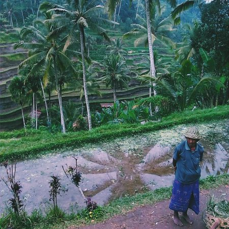 Bali Traditional Tours - Day Tours: Rice Terraces