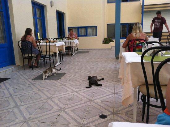 Central Hersonissos Hotel : Коты резвяться развлекая на ужине :)