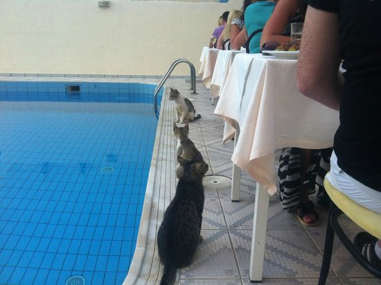 Central Hersonissos Hotel : У котов строгое разделение, у каждого свой стол! :))