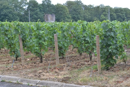 Champagnes Pommery : Vineyards on site