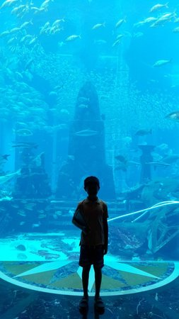Atlantis, The Palm : Big Aquarium