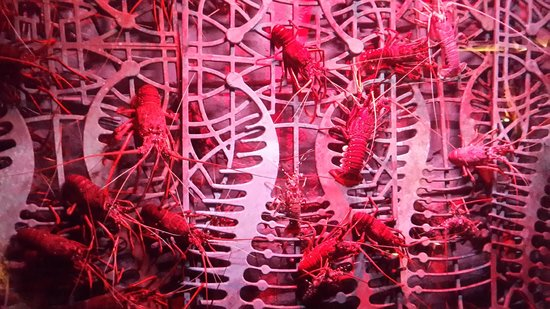 Atlantis, The Palm : Lobster at Lost of Chamber