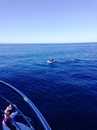 Sea World Whale Watch: Whales up close!