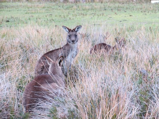 Wilsons Promontory National Park: Lots of wildlife on the Prom Wildlife Walk