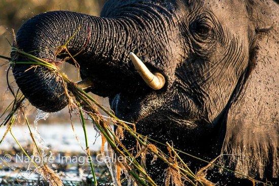 Pangolin Photo Safaris - Day Tours : Up close and personal