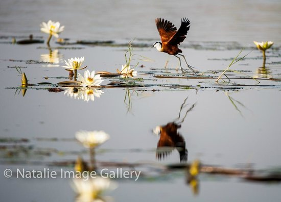 Pangolin Photo Safaris - Day Tours : Flying beauty