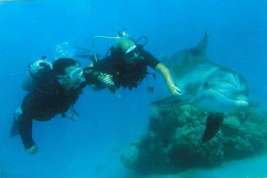 Dolphin Reef: погружение с дельфинами