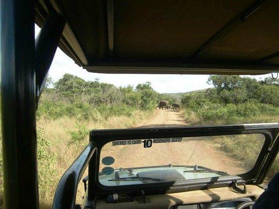 Zicht vanuit de safariwagen van Hilltop Camp, april 204