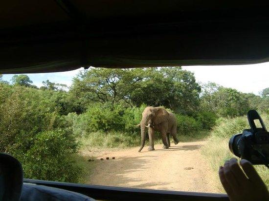 Hilltop Camp : Deze joekel van een olifantenman avhtervolgde onze safariwagen! april 2014