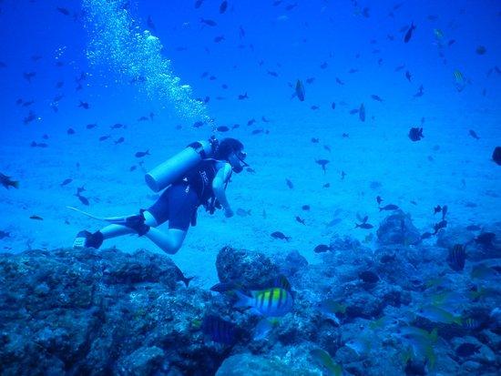 Drake Bay, คอสตาริกา: Isla del Caño