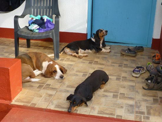 Swarga Home Stay: Ginger , Droopy and Ginger waiting for us to open our door !