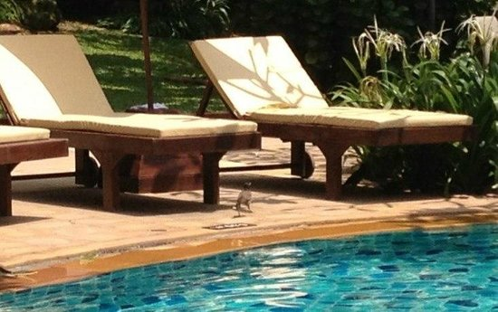 Ravindra Beach Resort & Spa: около бассейна