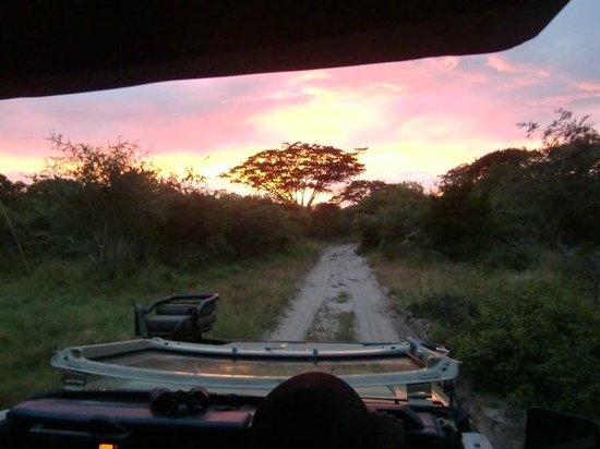 "Tembe Elephant Park Accommodation: ""Parapluboom"" tijdens de ochtendsafari in Tembe Elephant Park, april 2014"
