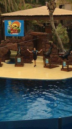 Oasis Park Fuerteventura: Amazing show!