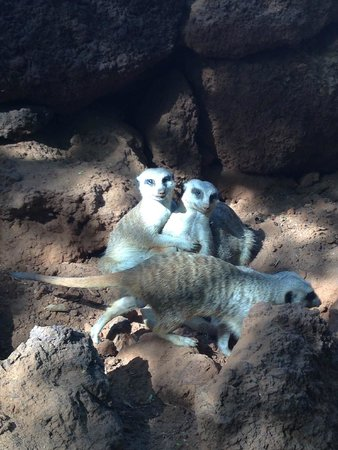 Oasis Park Fuerteventura: Cuddles!