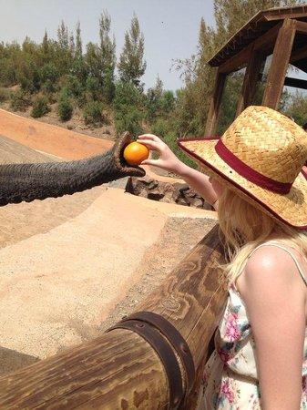 Oasis Park Fuerteventura: Feeding the elephants!