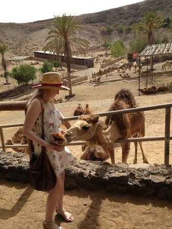 Oasis Park Fuerteventura: Up close and personal