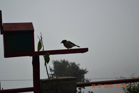 Mystic Mukteshwar Lodge: View from my room